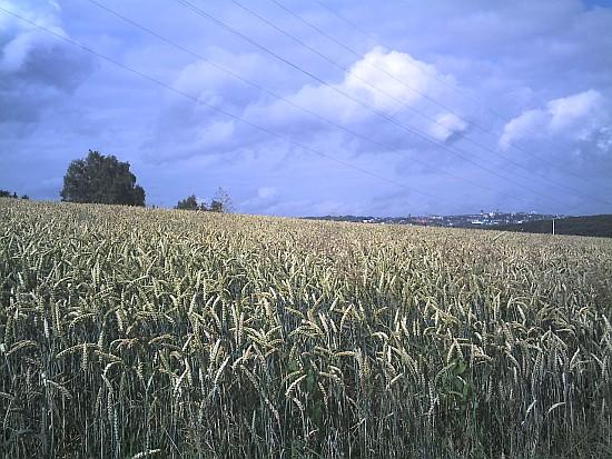 Weizen und Wolken